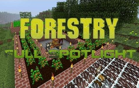 forestry01